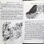 Brer Rabbit's a Rascal thumbnail 3